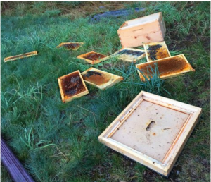 A Varied Life, Bee-keeping